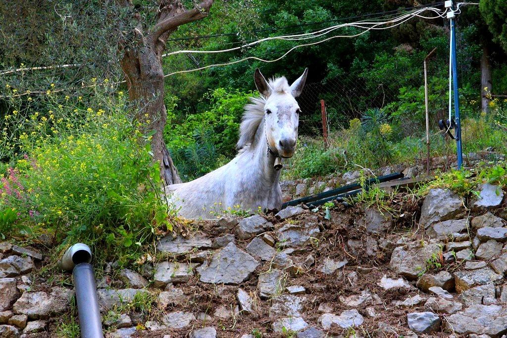 cheval gorges du loussios