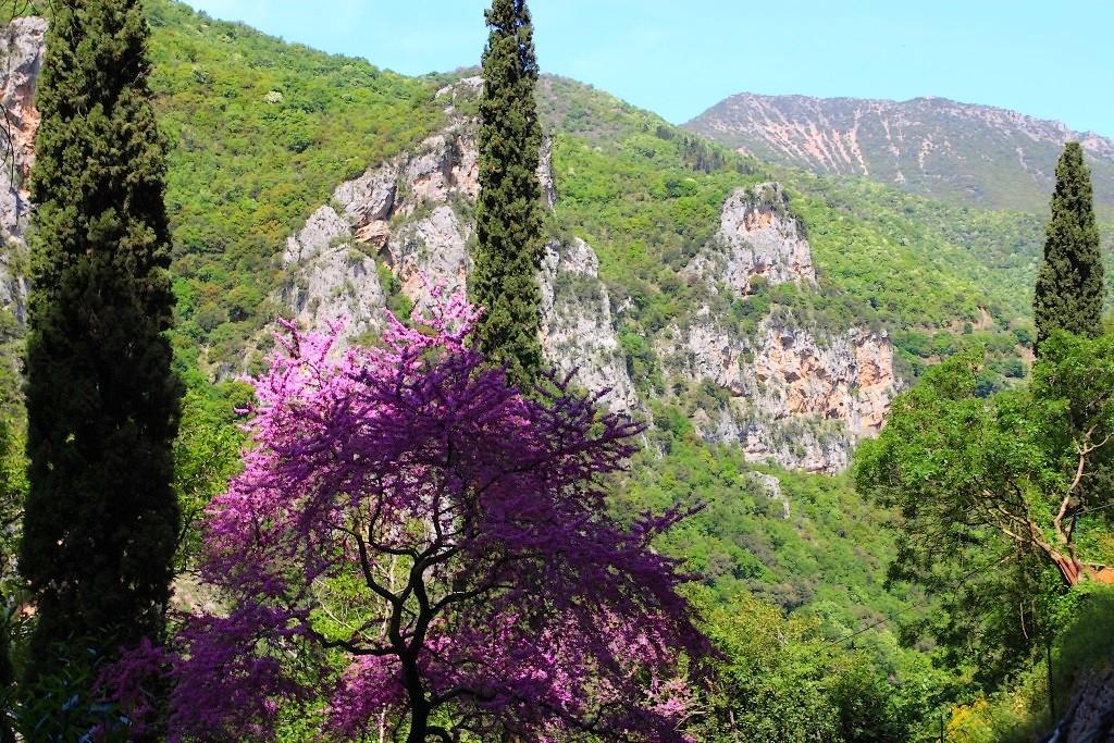 gorges du loussios arbre à fleurs