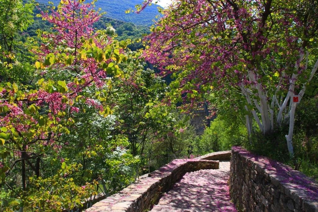 Arbres en fleurs des gorges de Loussios