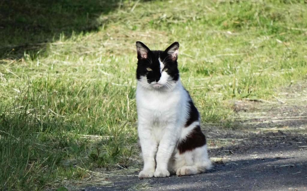 Chat sur le Chemin de Compostelle