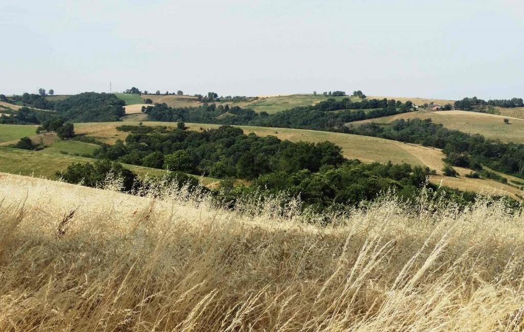 Champs de blé sur le Chemin de Compostelle