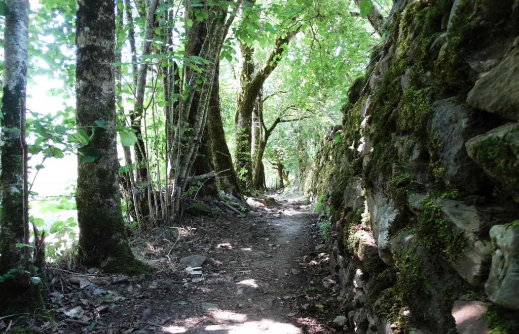 Forêt sur le Chemin de Compostelle