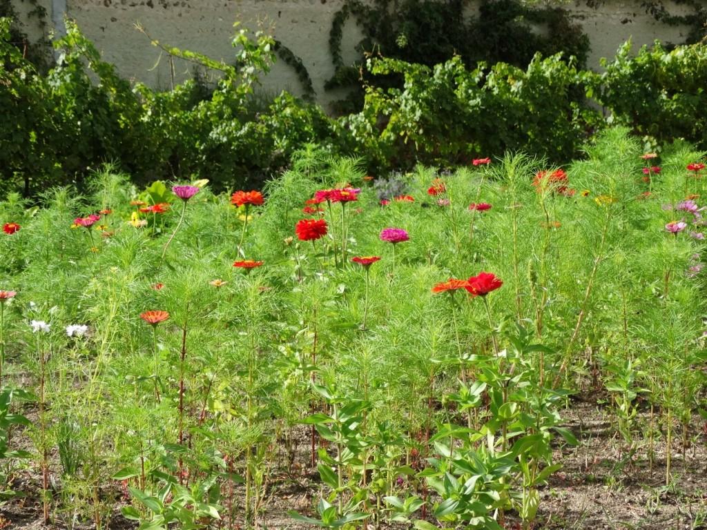 Fleurs potager du château de la Bussière