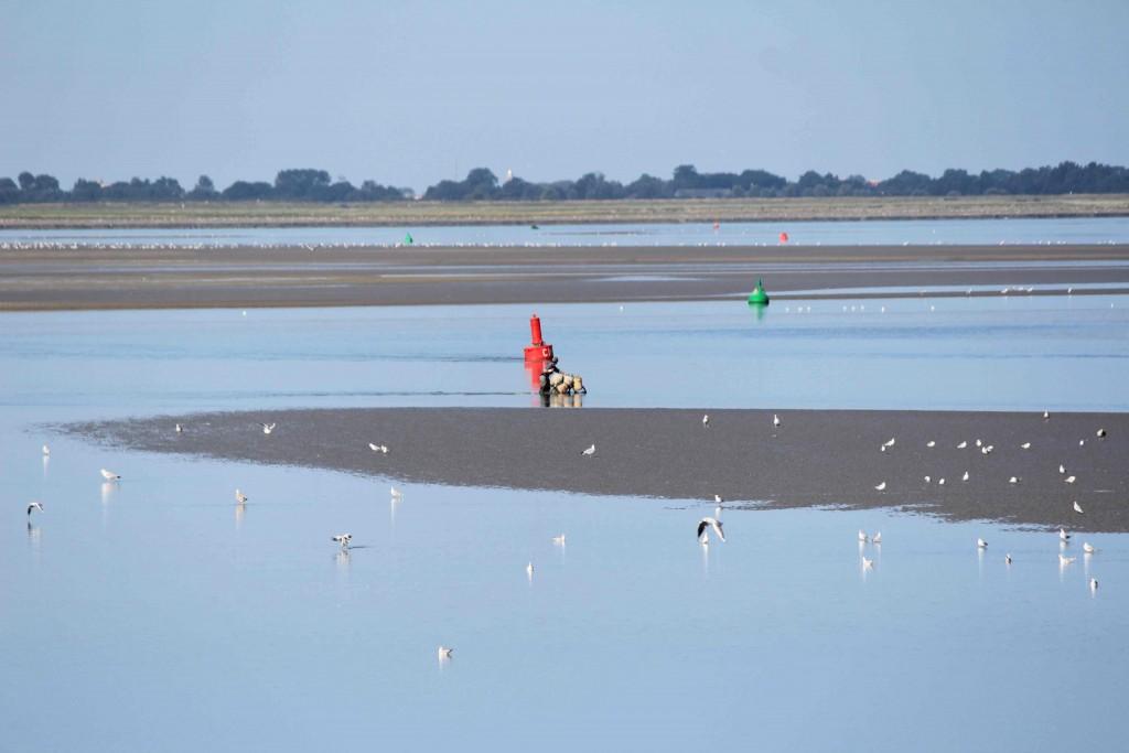 Pêcheur à pied de la Baie de Somme