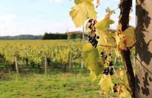 Dégustation à Préhy : vignoble Gueguen
