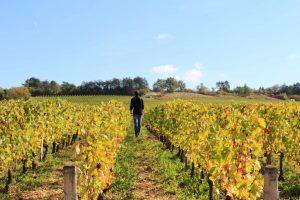 Balade dans les vignes à Irancy