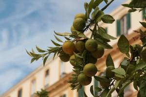 Oranges Malaga