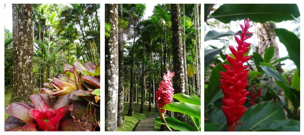 Fleurs du Jardin de Balata