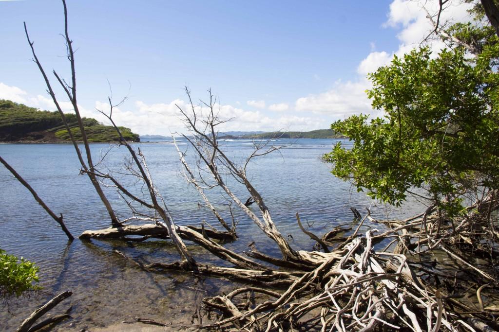 Baie du Trésor de la presqu'île de la Caravelle