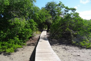 Cap Chevaier en Martinique