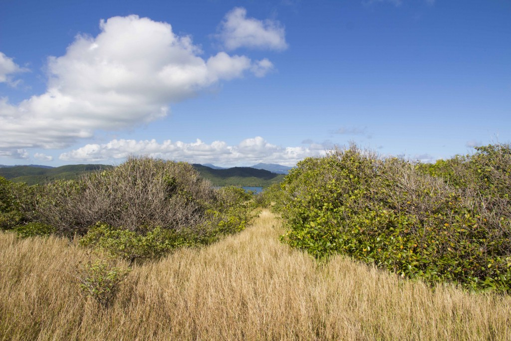 Ecosystème de la presqu'île de la Caravelle