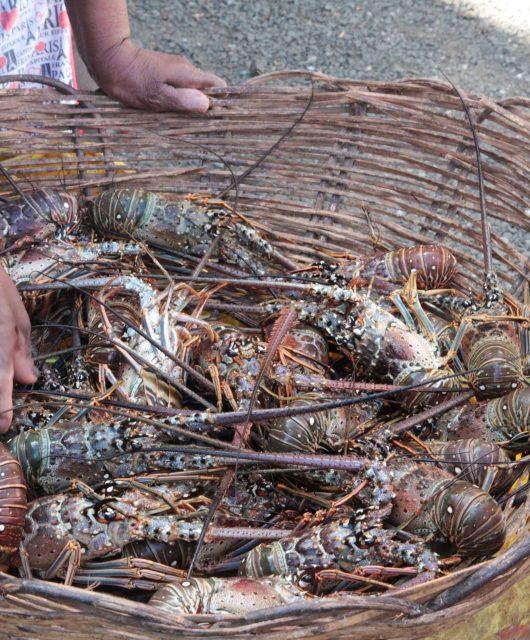Les marchés en Martinique