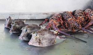 Marché aux poissons en Martinique