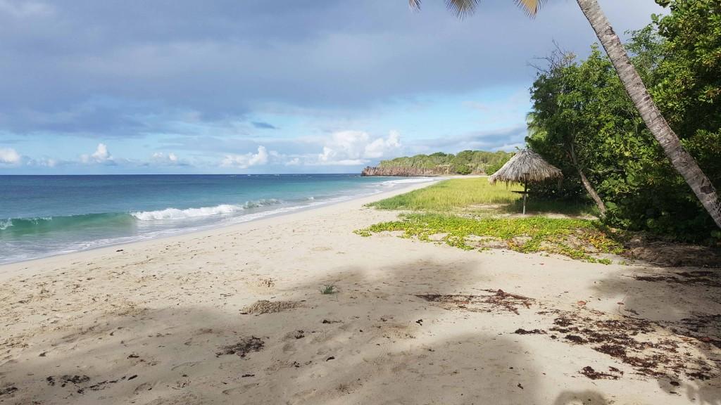 Trail en Martinique