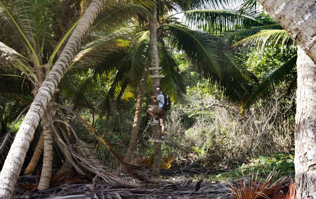 Palmiers de Cap Macabou