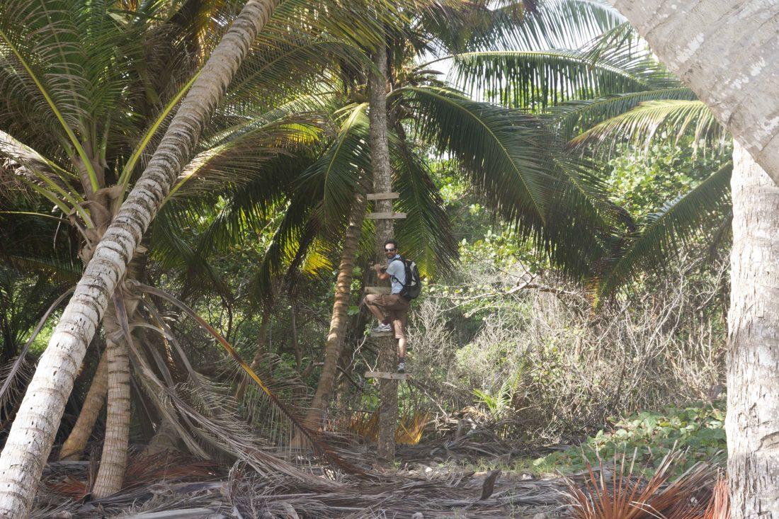 Randonnée Cap Macabou