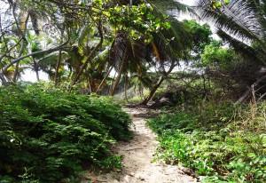 Randonnée à Cap Macabou