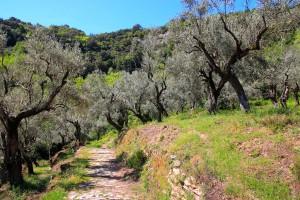 Road Trip en Grèce : Pélion